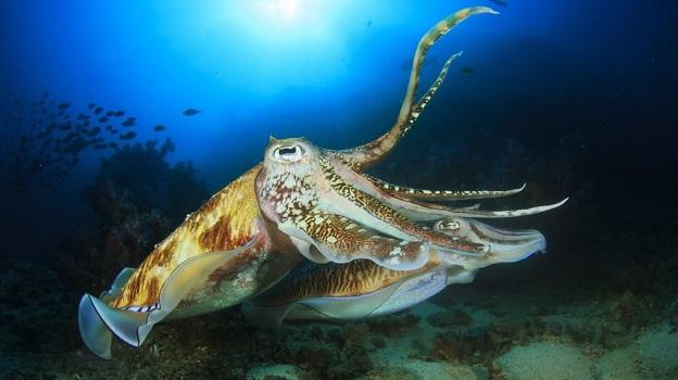 Удивительные каракатицы