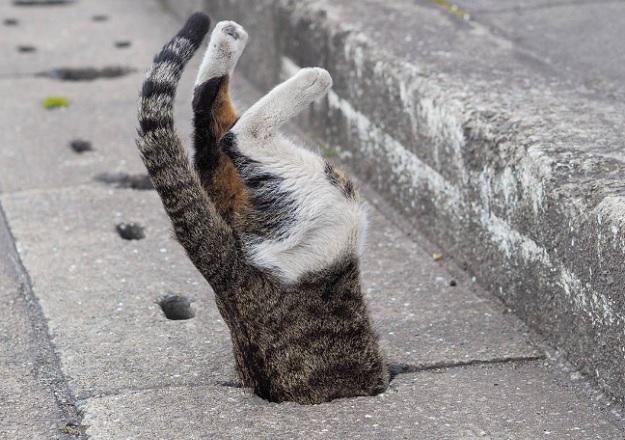 Кот протискивается в сливное дорожное отверстие