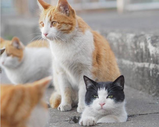 Японские кошки, приспособили под свои игры дорожные сливные отверстия.
