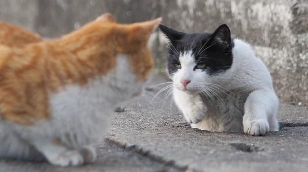 Кот ждет своей очереди в дорожное отверстие