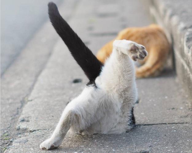 Не каждый кот сделан под отверстие