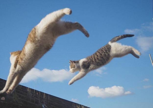 Это не останавливает некоторых кошек от больших прыжков