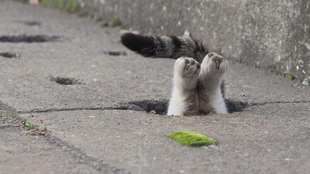 Кот прыгнул в дорожную яму