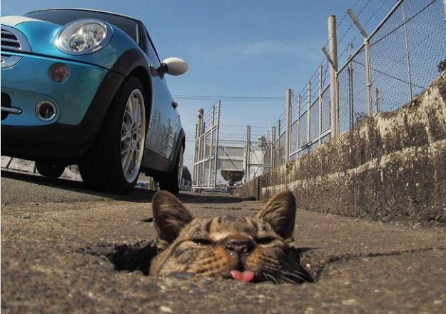 Кот показывает язык