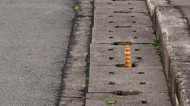 Кот исследует дренажную сеть