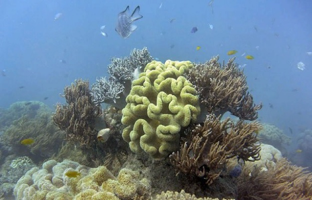 Коралл Большого Барьерного рифа пытается выжить после изменения климата и обесцвечивания.
