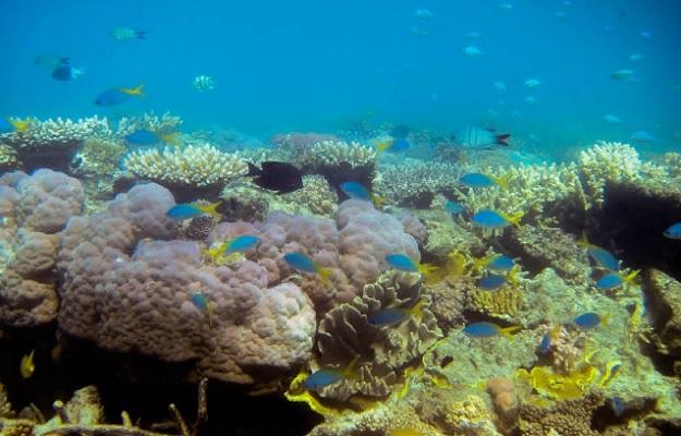 биоразнообразие Большого Барьерного рифа